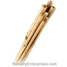 "500 Bamboo Stakes 3/8"" x 4' 